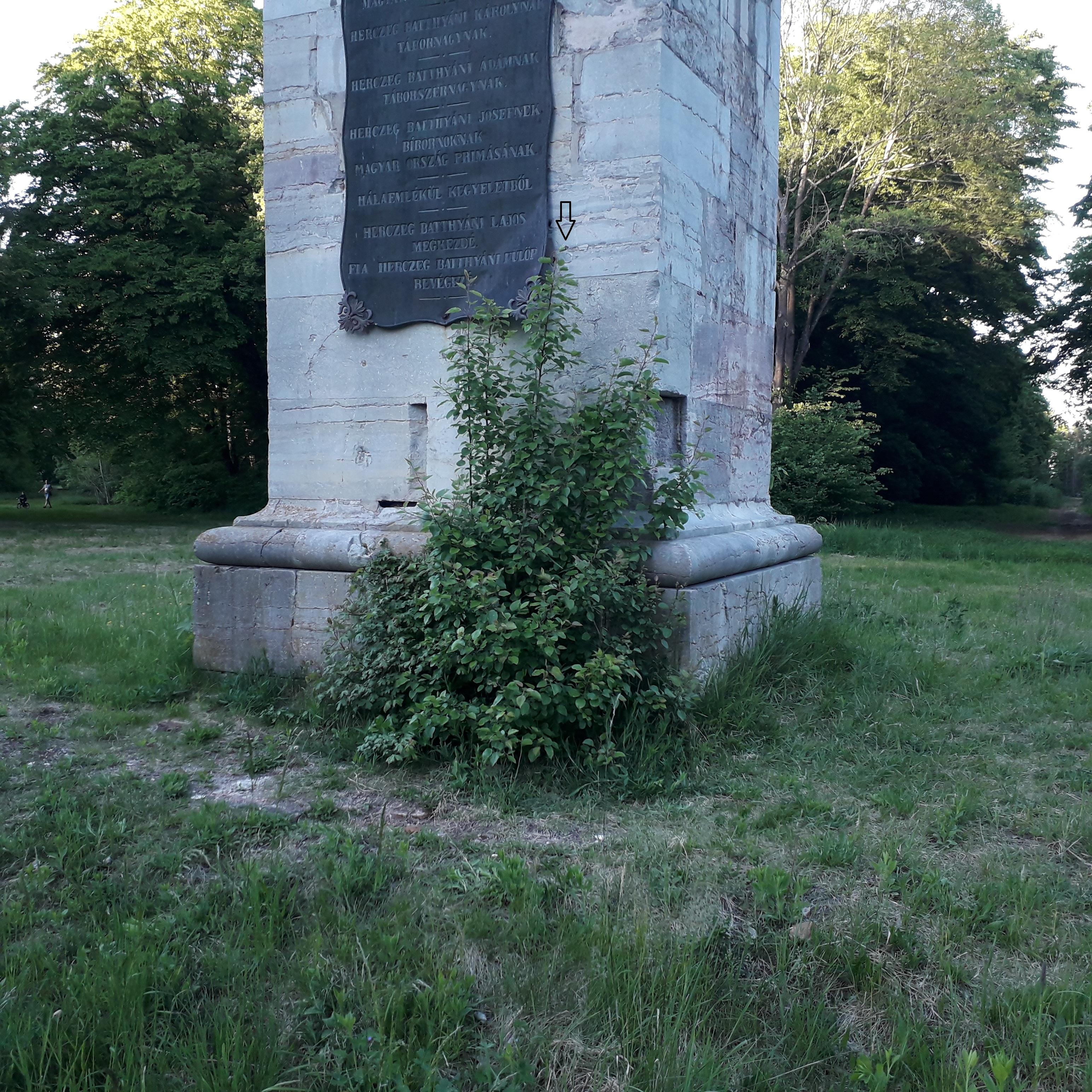 Vadkörte az obeliszk tövében.